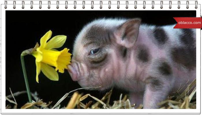 Интересные факты из жизни животных в анимированых картинках/3518263__1_ (700x400, 329Kb)