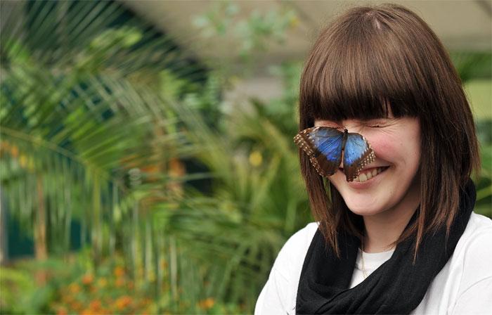 butterfly2042409 (700x448, 184Kb)