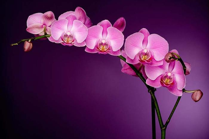 орхидеи и лили картинки фото