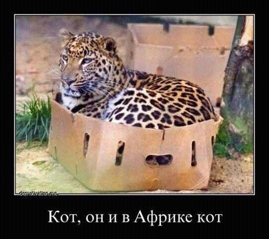 smeshnie_kartinki_138416514340 (540x480, 129Kb)