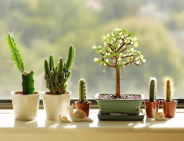 windowsill-decorating-ideas-plants1 (600x460, 143Kb)