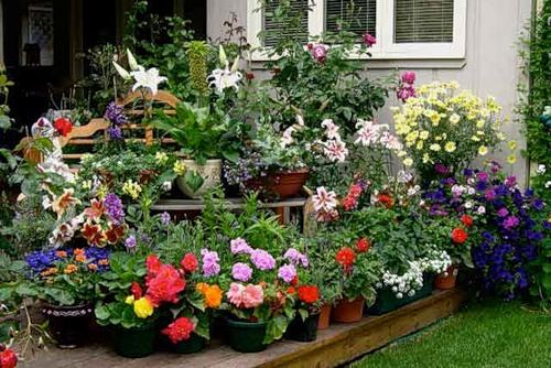 Дизайн на даче цветов