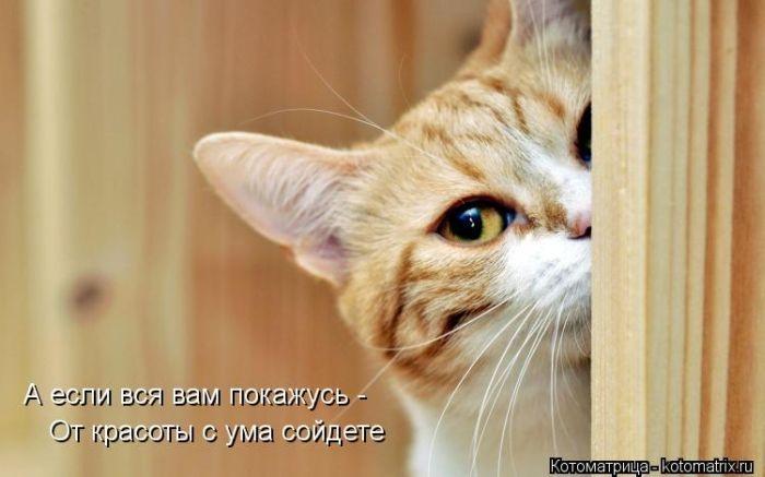 1384712162_cm_20131115_03379_004 (700x437, 122Kb)