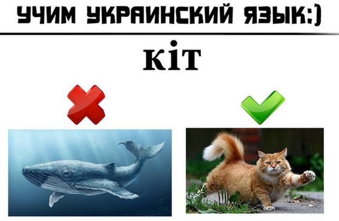 1384239070_ukr_lang_01 (700x456, 55Kb)