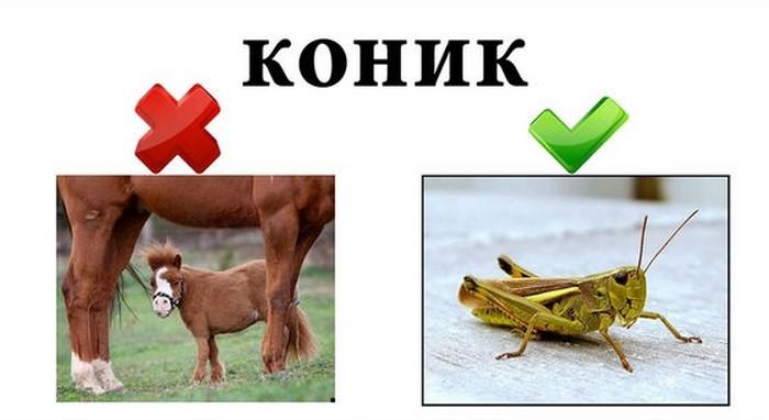 1384239096_ukr_lang_03 (700x382, 47Kb)