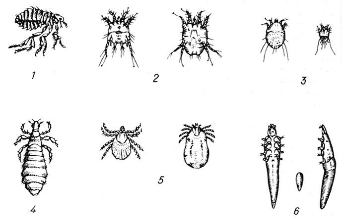 принимать от паразиты организме человека