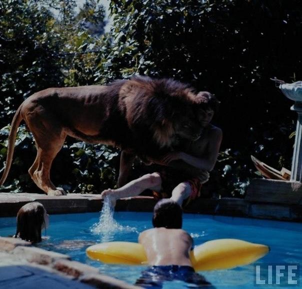 львы фото 8 (604x577, 152Kb)