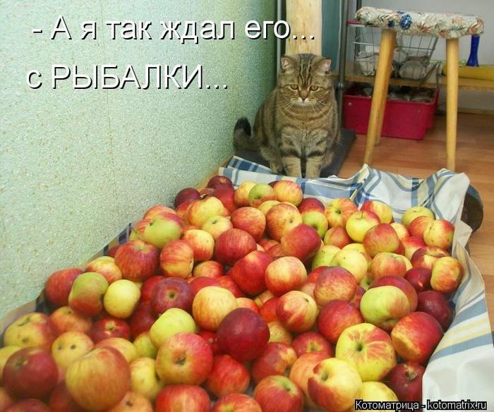 kotomatritsa_XO (700x584, 322Kb)