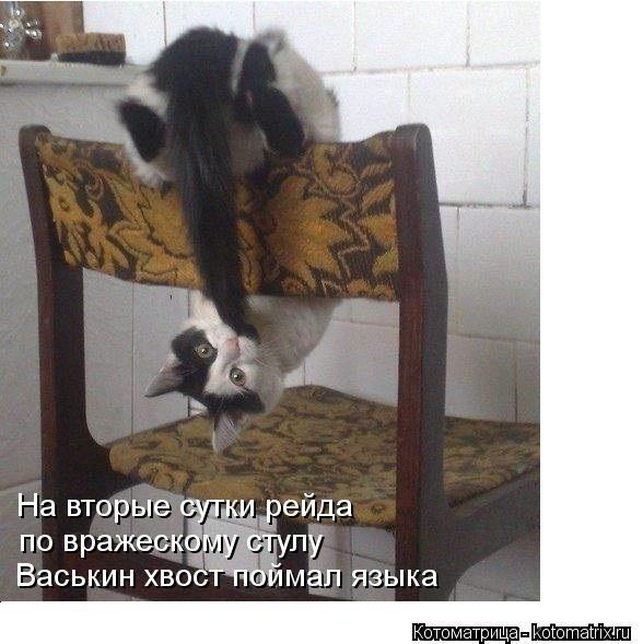 kotomatritsa_05 (588x589, 130Kb)