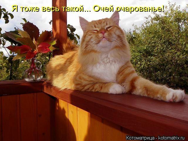 kotomatritsa_Ch (640x480, 175Kb)