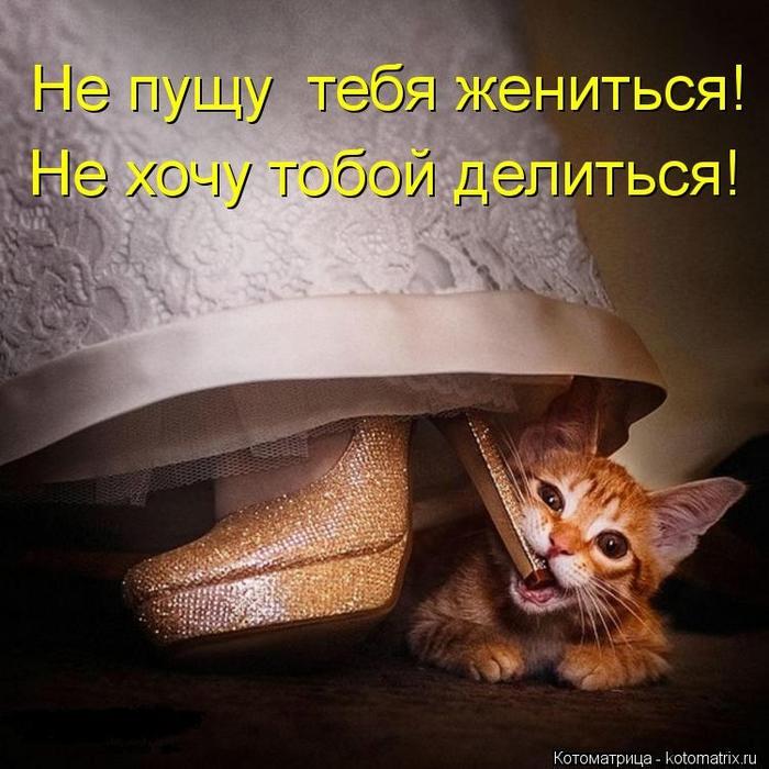 kotomatritsa_eC (700x700, 305Kb)