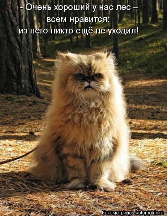 kotomatritsa_lQ (540x697, 194Kb)