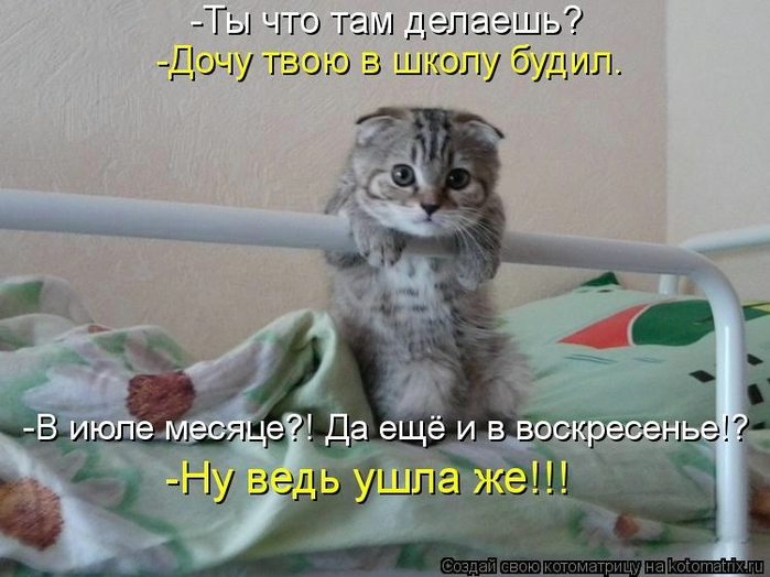 kotomatritsa_Mv (700x524, 232Kb)