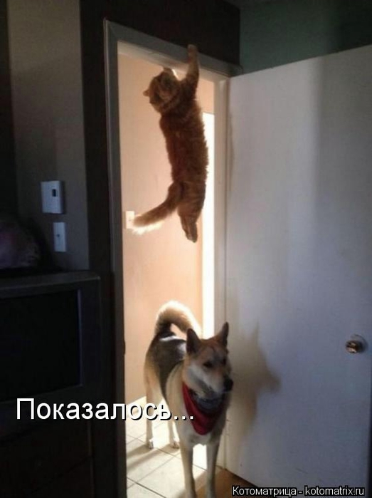 kotomatritsa_ri (523x700, 144Kb)