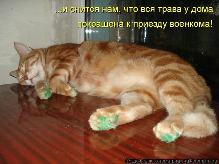 kotomatritsa_Wo (700x524, 237Kb)