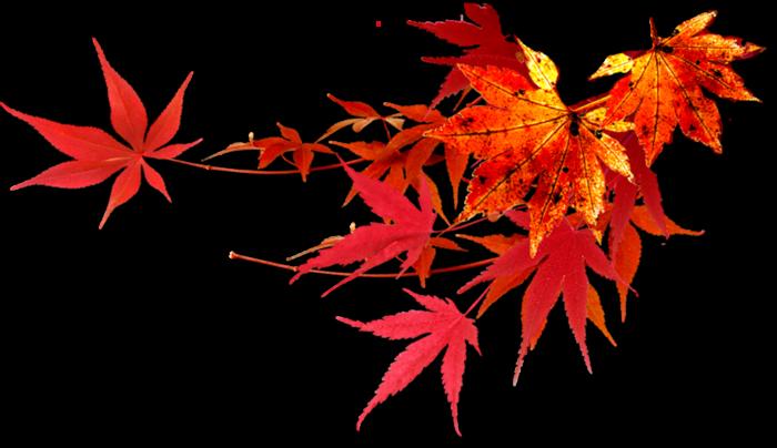 Сейчас осень