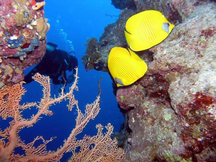 Волшебные фото подводного мира от Дэвида Хогана