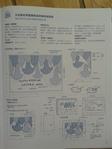 Превью гавайский квилт. японский журнал (32) (525x700, 232Kb)
