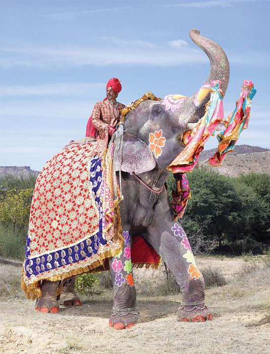 парад слонов джайпур 1 (533x700, 511Kb)