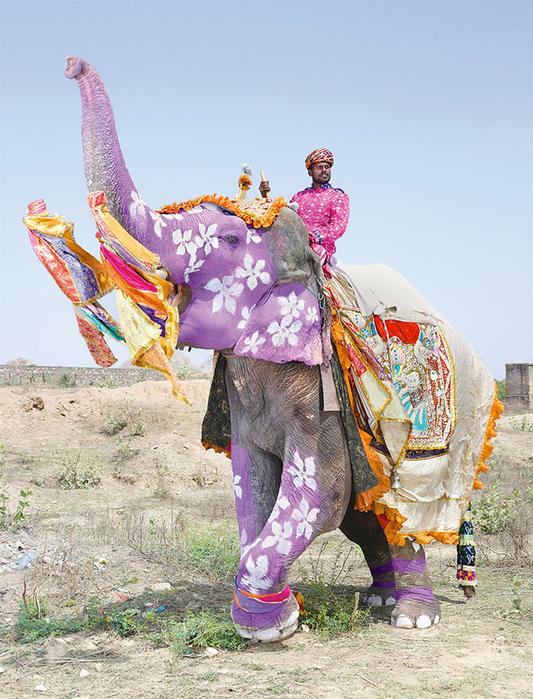 парад слонов джайпур 2 (533x700, 466Kb)