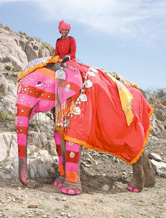парад слонов джайпур 4 (533x700, 520Kb)