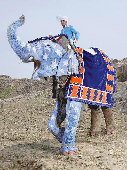 парад слонов джайпур 7 (524x700, 471Kb)