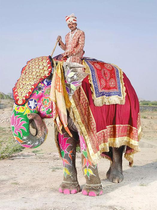 парад слонов джайпур 9 (524x700, 439Kb)