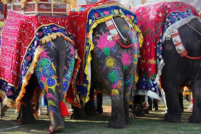 парад слонов джайпур 11 (670x446, 437Kb)