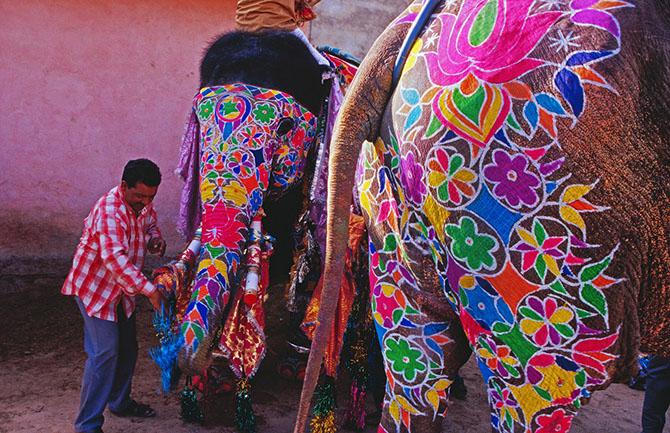 парад слонов джайпур 14 (670x433, 414Kb)