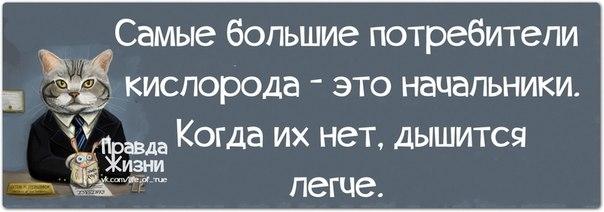 1384886517_frazochki-19 (604x212, 73Kb)
