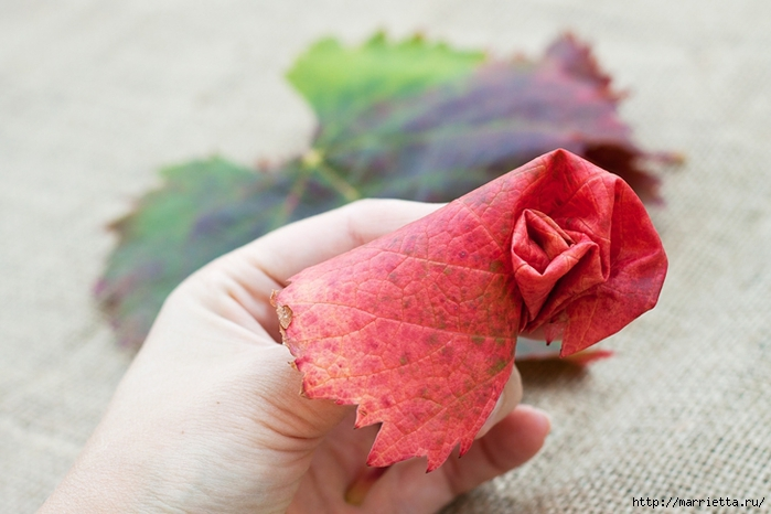 Осенний букет из виноградных листьев (5) (700x466, 201Kb)