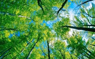 лес 1 (320x200, 135Kb)