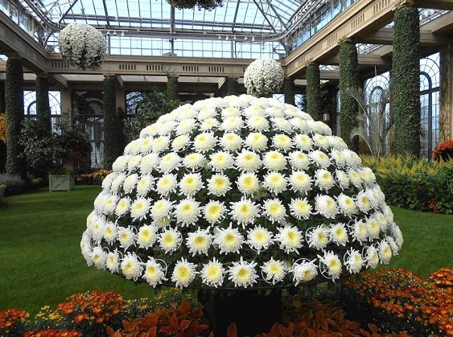 11a white dome of 500 mums (640x476, 345Kb)