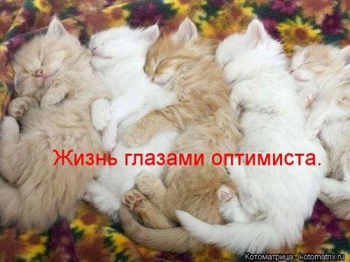 1350051299_kotomatrix-121012-2 (500x375, 160Kb)