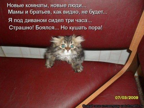 1350051329_kotomatrix-121012-9 (500x375, 149Kb)