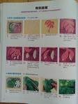 Превью Гавайский квилт 5. Японская книжка (49) (525x700, 231Kb)