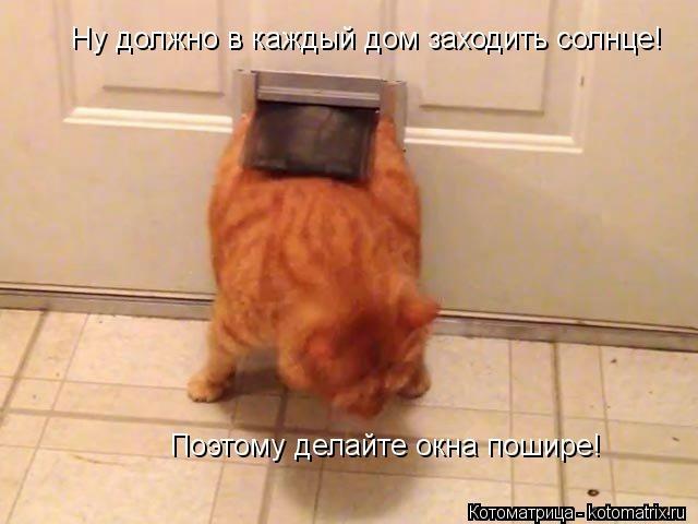 kotomatritsa_0I (640x480, 102Kb)