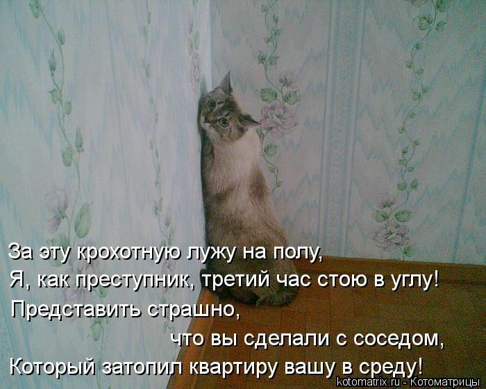 kotomatritsa_Ce (700x560, 186Kb)