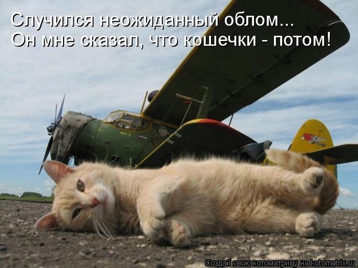 kotomatritsa_gy (700x524, 222Kb)