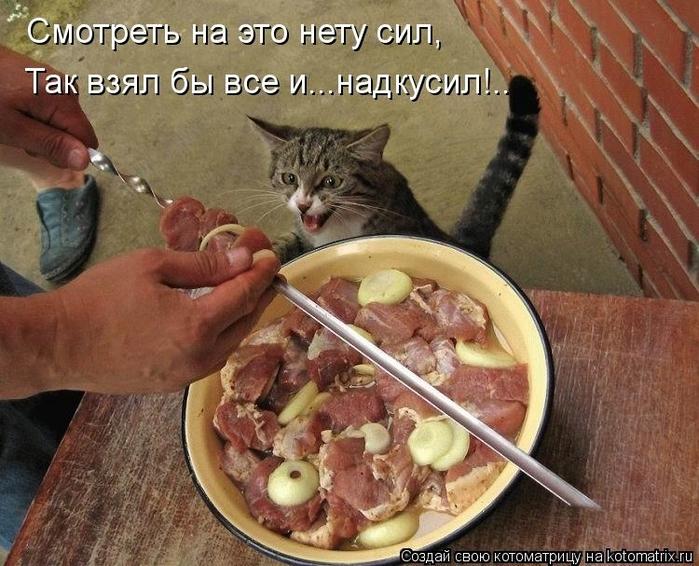 kotomatritsa_j5 (700x566, 314Kb)