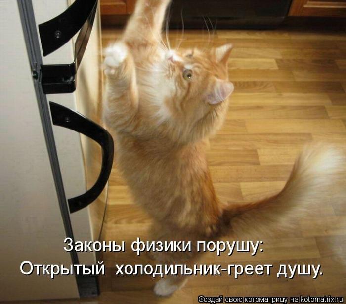 kotomatritsa_Kz (700x615, 252Kb)