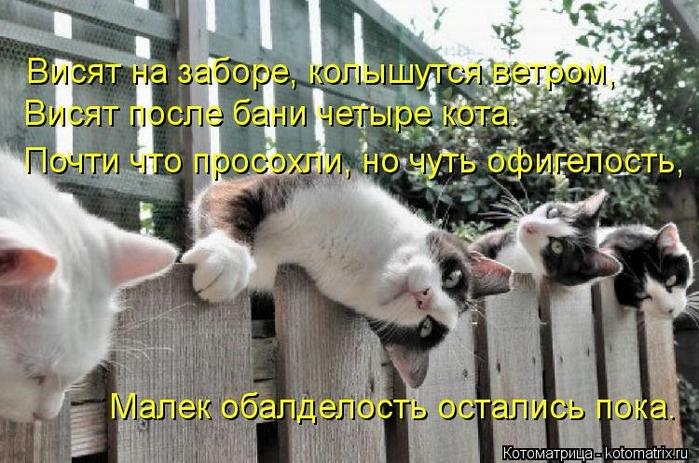 kotomatritsa_O (700x463, 275Kb)