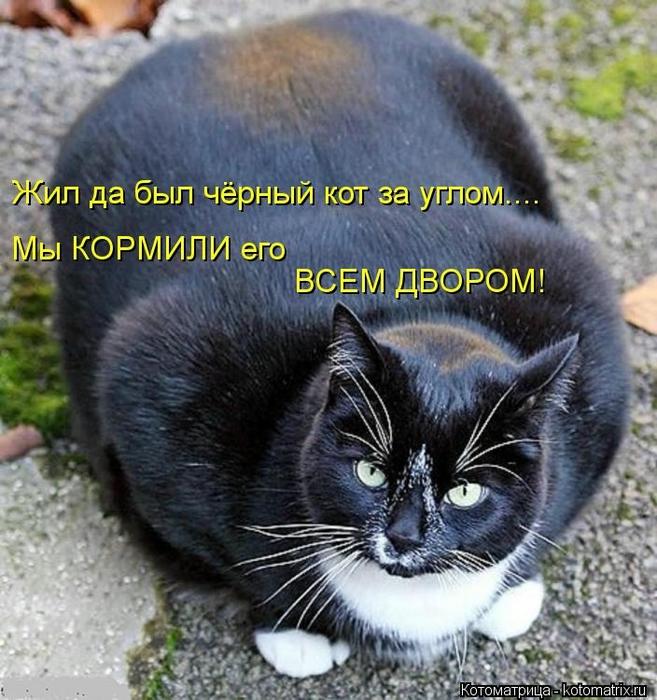 kotomatritsa_sH (657x700, 323Kb)