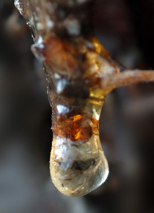 сибирская чистка от паразитов