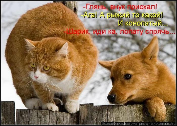 kotomatritsa_FZ (700x499, 281Kb)
