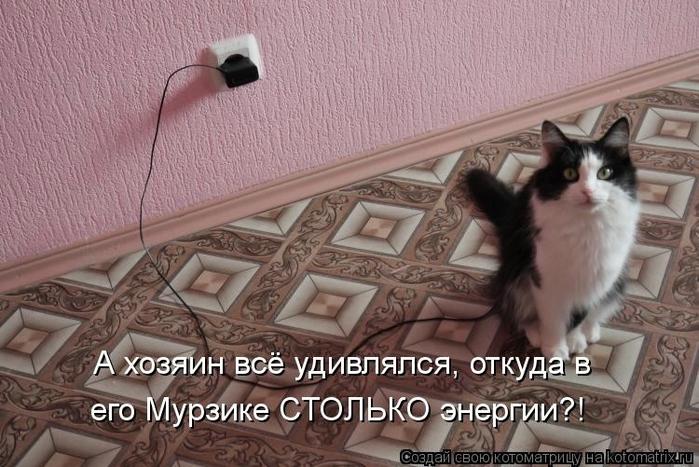 kotomatritsa_rB (700x467, 259Kb)