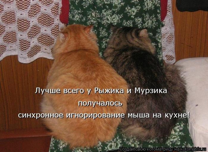kotomatritsa_sj (700x510, 288Kb)