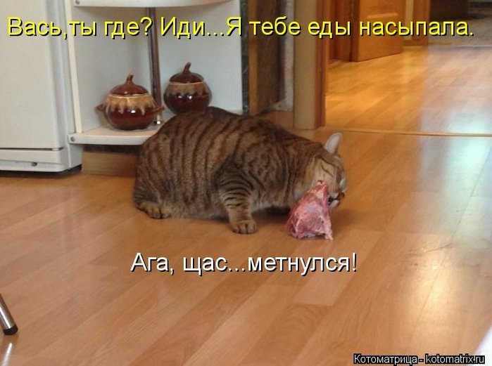 kotomatritsa_Ti (700x521, 212Kb)