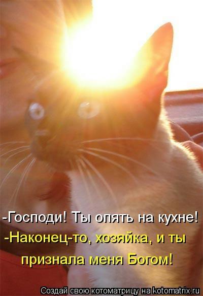 kotomatritsa_u (400x583, 86Kb)