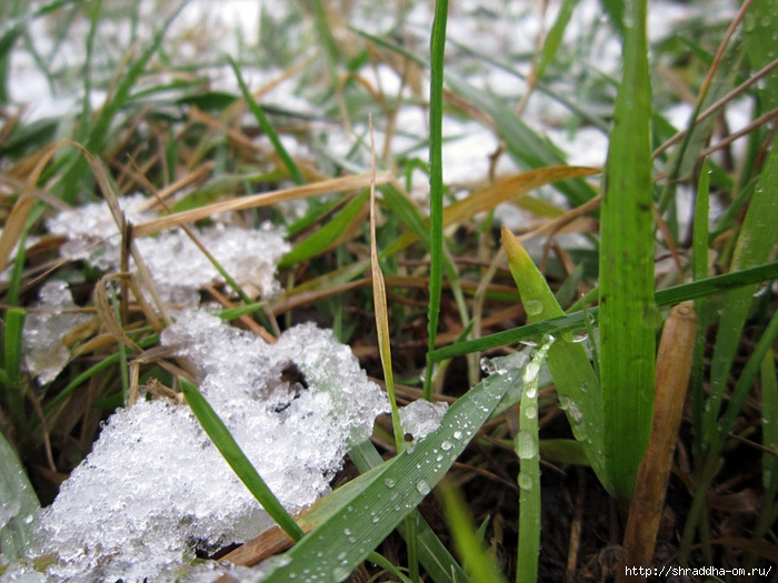 первый снег (1) (700x525, 304Kb)